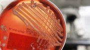 Niezniszczalna bakteria rodem z Indii