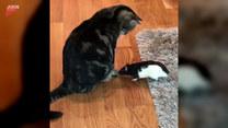 Niezwykła przyjaźń kota i szczura