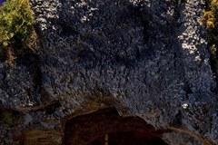 Niezwykła szopka stanęła na Placu świętego Piotra