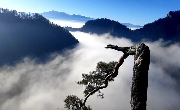Niezwykłe piękno i niezwykłe historie… Poznajcie najsłynniejsze polskie drzewa!