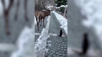 Niezwykłe spotkanie. Kot mógł poznać się z...