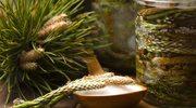 Niezwykłe właściwości i zastosowanie syropu z sosny. Jak zrobić go samodzielnie?