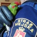 Niezwykły gość w warszawskim mieszkaniu. Papuga z nogą w gipsie wleciała przez okno