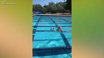 Niezwykły wyczyn słynnej pływaczki. Wideo