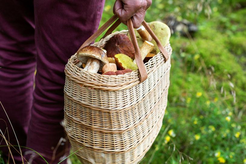 Nigdy nie należy wynosić z lasu grzybów, których nie jesteśmy pewni /123RF/PICSEL