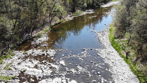 Niski stan wody na rzece Soła w Żywcu / Andrzej Grygiel    /PAP