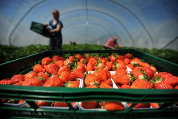 Niższa będzie w tym roku w Polsce jakość owoców i warzyw /AFP