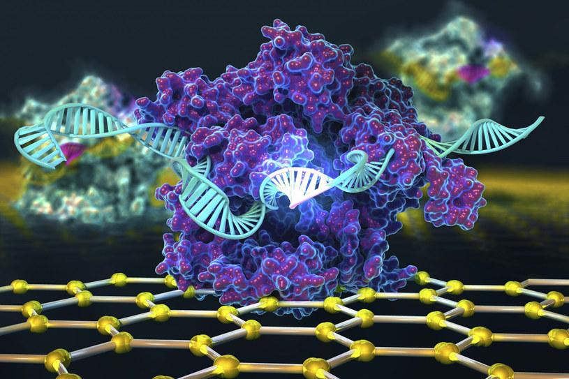 Nobel 2020 z chemii został przyznany za tzw. nożyczki do genów /ELLA MARU STUDIO/Science Photo Library/East News /East News