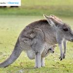 """""""Nonecks"""", czyli zwierzęta bez szyi, jednym z zabawniejszych profili na Instagramie"""