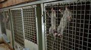 Norwegia: Szczur w restauracji. Lokal zamknięty