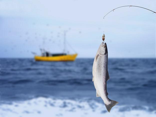 """""""Norweskiego"""" łososia importujemy ze... Szwecji /©123RF/PICSEL"""