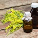 Nostrzyk żółty: Zastosowania i właściwości lecznicze