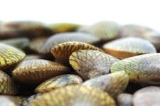Nowa Zelandia: Pół miliona małż ugotowanych żywcem