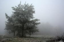 Nowe alerty IMGW. Mgła i roztopy