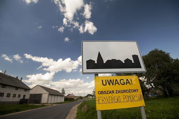 Nowe ognisko ASF odkryto w gminie Gołdap. Fot. Agencja Wschód /FORUM