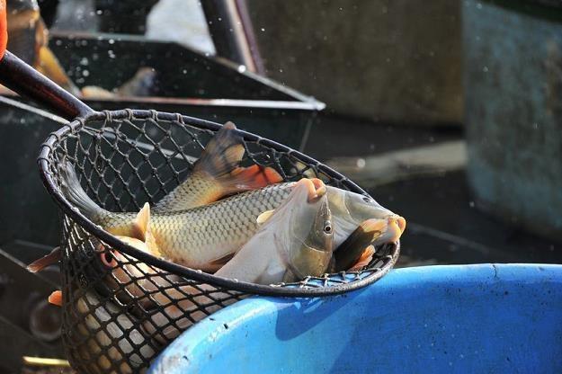 Nowe Prawo wodne uderzy w gospodarstwa rybackie /AFP