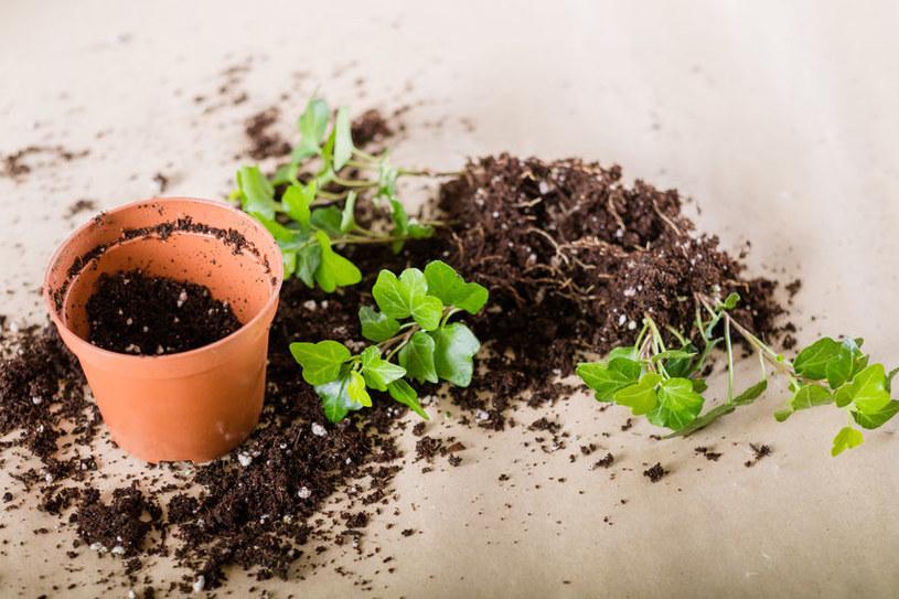 Nowe sadzonki roślin /©123RF/PICSEL
