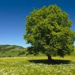 Nowe stawki opłat za wycinkę drzew i krzewów