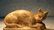 Nowe światło na historię domowych kotów