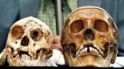 Nowe wnioski naukowców dot. hobbita z Indonezji
