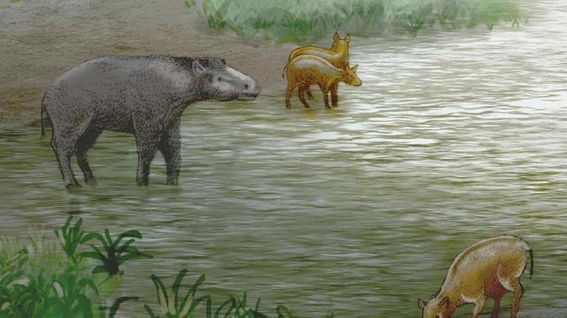 Nowi członkowie rodziny Palaeotheriidae /materiały prasowe