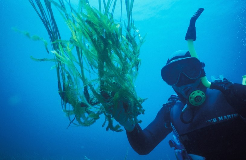 Nowo odkryte właściwości trawy morskiej nie sprawią jednak, że możemy zapomnieć o ochronie mórz i oceanów przed zanieczyszczeniem / Patrick AVENTURIER / Contributor /Getty Images