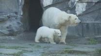 Nowy domownik berlińskiego zoo. To jego pierwsze kroki