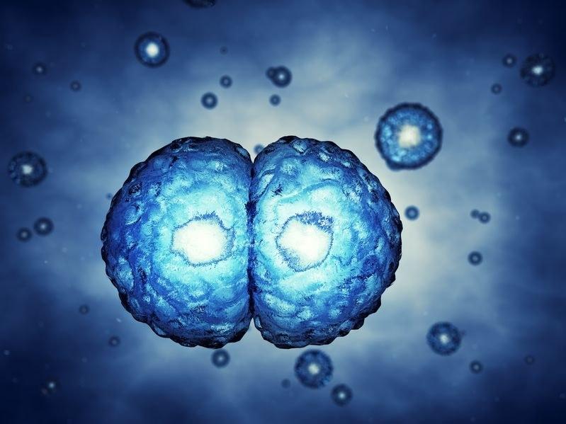 Nowy lek hamuje podziały komórkowe /123RF/PICSEL