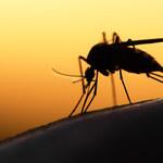 Nowy sposób walki z malarią