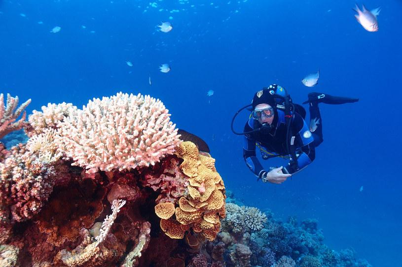 Nurkowanie stanowi jedną z największych atrakcji Egiptu. Jest sportem dla każdego, kto tylko pragnie zaznać wyjątkowej przygody pełnej niesamowitych wrażeń /123RF/PICSEL