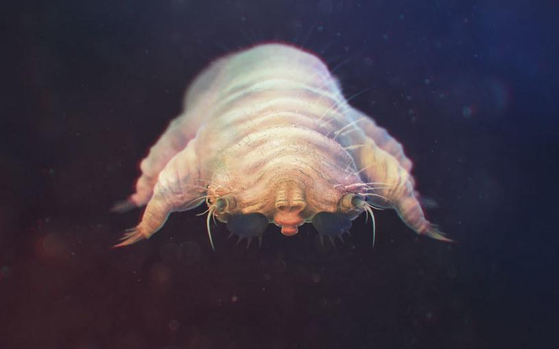 Nużeniec to pajęczak z rzędu roztoczy /123RF/PICSEL
