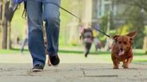 O czym warto pamiętać adoptując zwierzaka lub zapewniając mu dom tymczasowy?