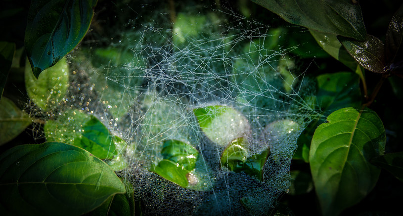 O ich obecności świadczy delikatna pajęczynka /123RF/PICSEL
