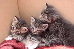 O małe kocięta troskliwie martwi się ich mama