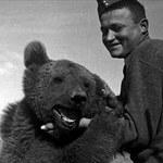 O niedźwiedziu, co poszedł na wojnę