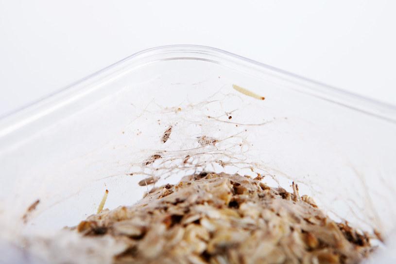 O obecności moli świadczy przędza widoczna w produktach spożywczych /123RF/PICSEL
