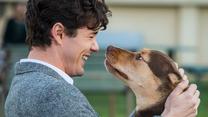 """""""O psie, który wrócił do domu"""" [trailer]"""
