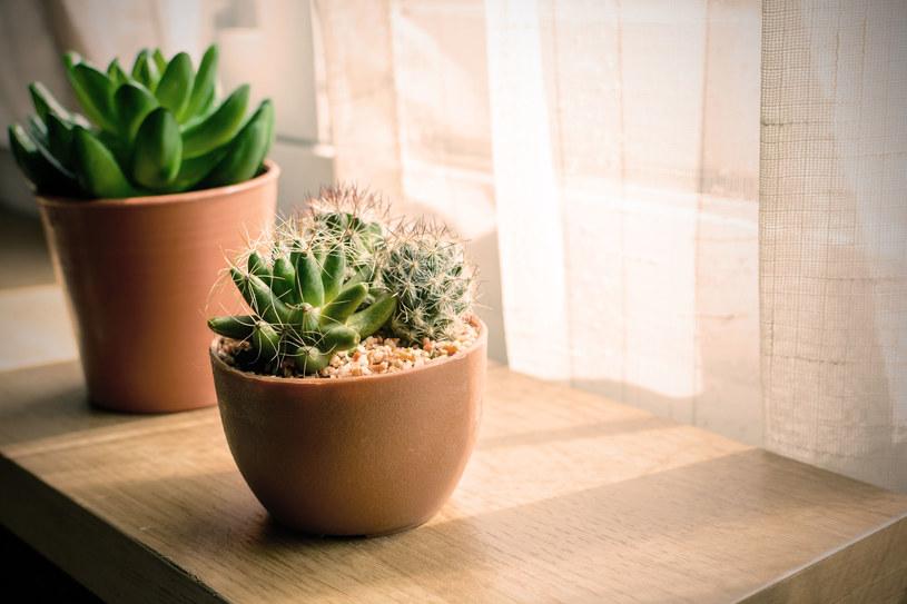 O rośliny doniczkowe trzeba wyjątkowo dbać /123RF/PICSEL