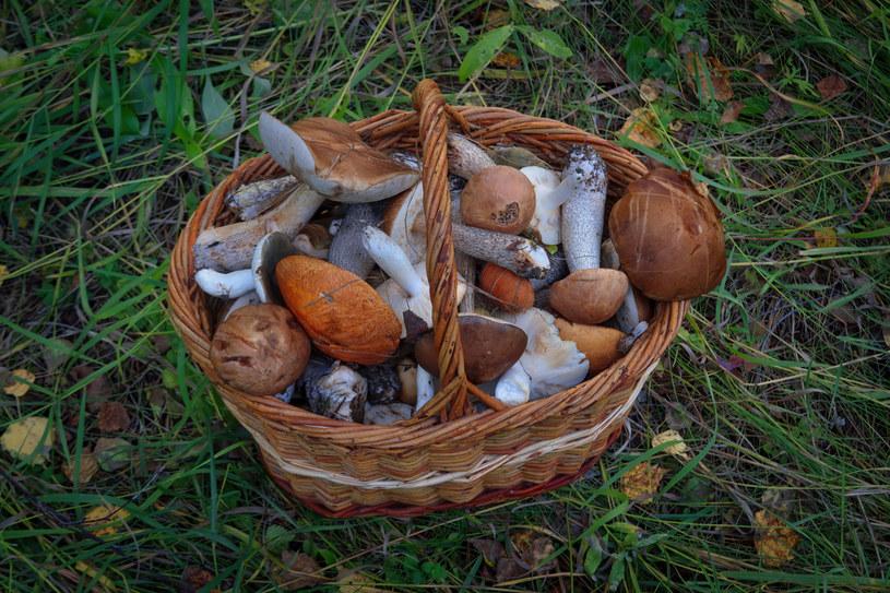 O tej porze roku wyruszamy z koszami do lasu po grzyby /123RF/PICSEL