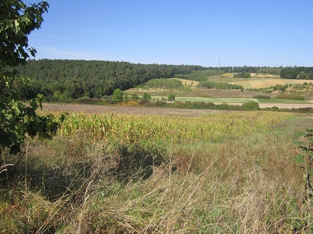 O tym, czy grunt jest gospodarstwem rolnym, decyduje jego klasyfikacja w ewidencji gruntów /INTERIA.PL