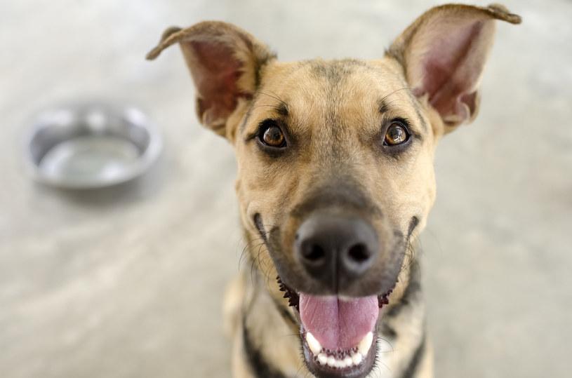 O tym, że pies jest najlepszym przyjacielem człowieka, nie trzeba nikogo przekonywać /123RF/PICSEL