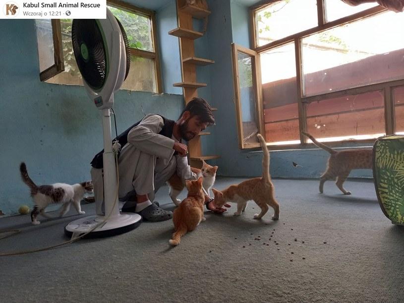 Obecnie Kabul Small Animal Rescue działa ze zdwojoną siłą. Wolontariusze i pracownicy starają się ratować zwierzęta /Facebook/KabulSmallAnimalRescue  /Facebook
