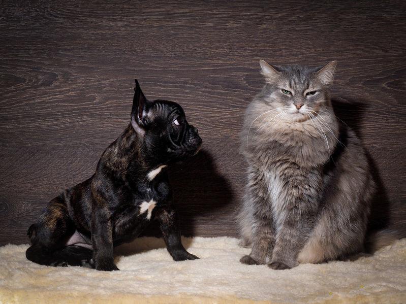 Obecność nowego zwierzaka może powodować, że kot zmieni swoje zachowanie /123RF/PICSEL