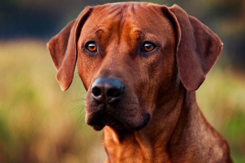 Obecność psa w domu świetnie wpływa na rozwój dzieci /123RF/PICSEL