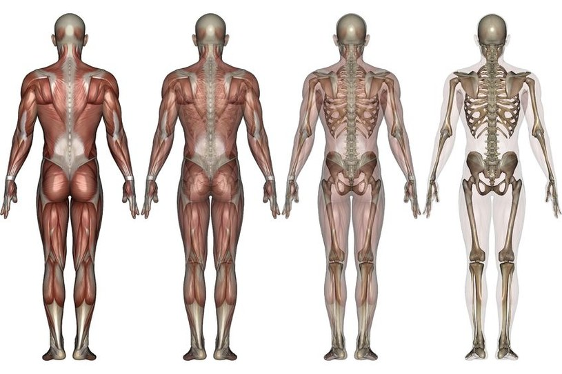 Obecny gatunek człowieka Homo Sapiens przestanie istnieć w swojej obecnej wersji i zostanie wyparty przez mutanta Homo Perturbatus. /123RF/PICSEL