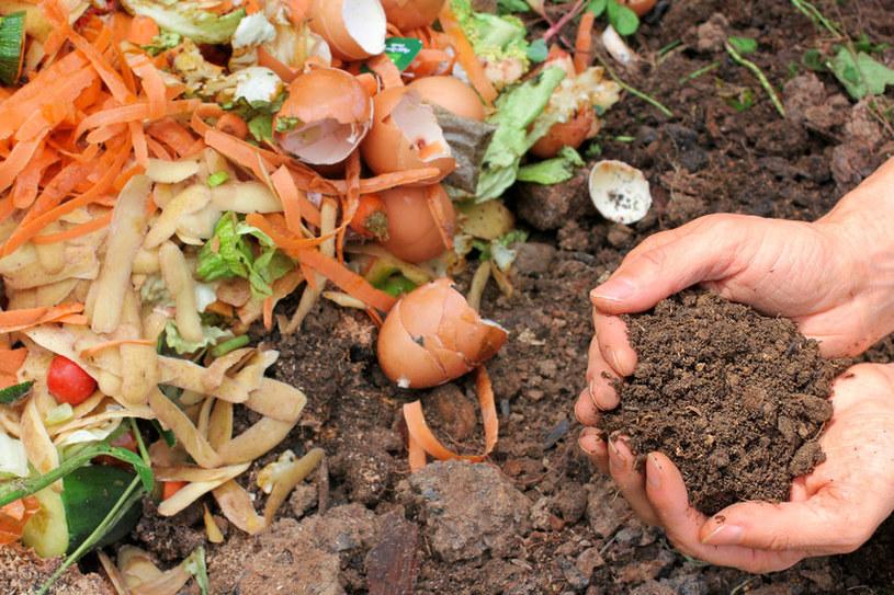 Obierki warzyw często lądują na kompoście, ale to niejedyne ich zastosowanie! /123RF/PICSEL