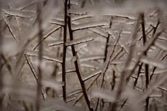 Oblodzone drzewa w okolicy Skarżyska Kamiennej
