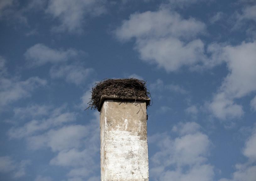 """""""Obok gniazdo. W tym roku pozostanie bez lęgu"""" - napisało PTOP pod zdjęciem martwego bociana; Zdj. ilustracyjne /Michal Kosc / AGENCJA WSCHOD /Reporter"""