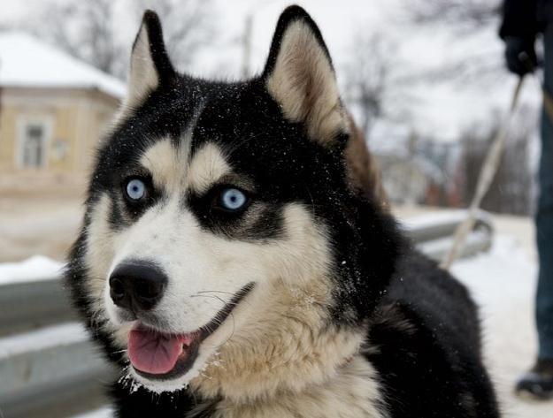 Obowiązkowe czipowanie spowoduje, że każdy pies otrzyma paszport /©123RF/PICSEL