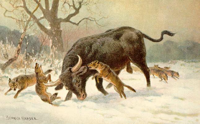 Obraz autorstwa Heinrich Hardera przedstawiający tura walczącego z wilkami /Wikipedia